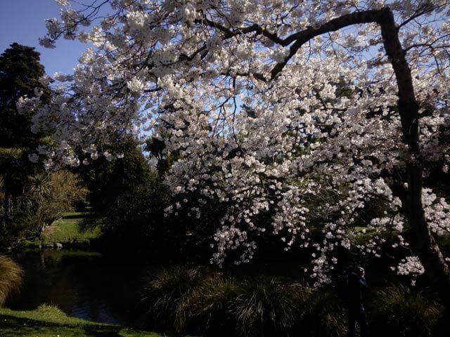 chch_spring2